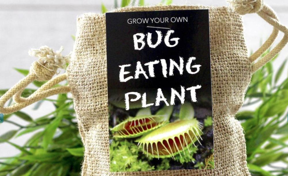 Desk flytrap