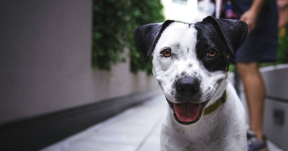 happy dog on a leash outside