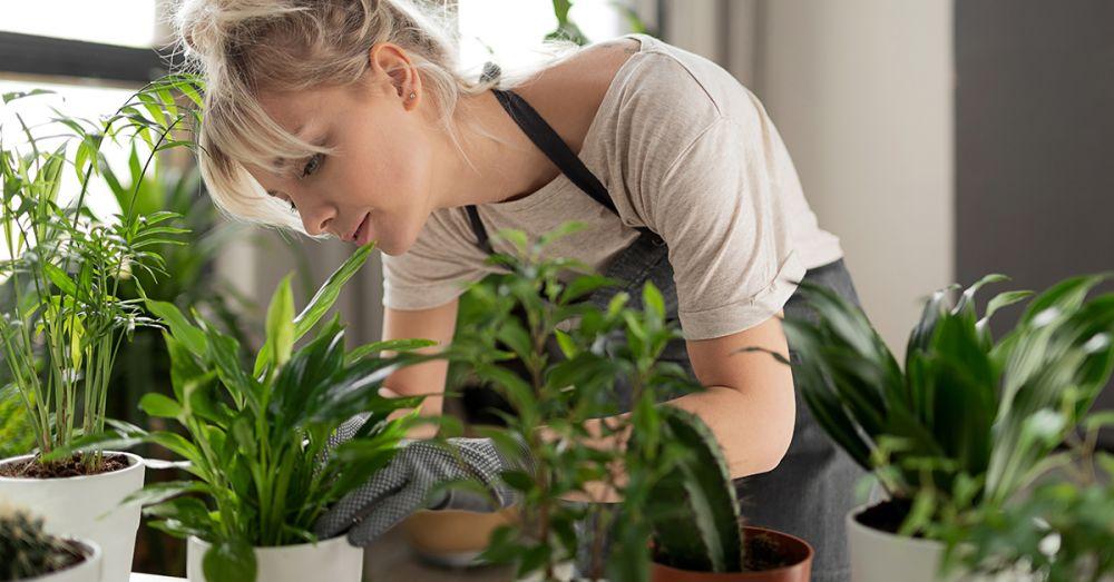 Woman tending to indoor plants