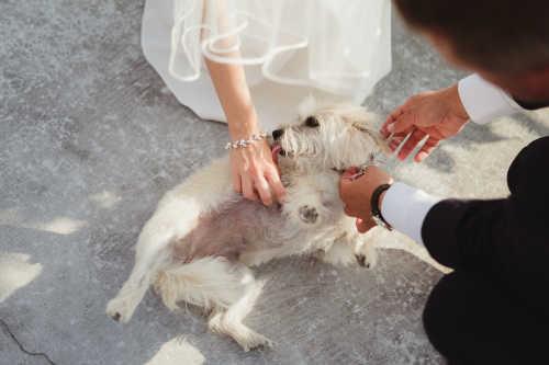 Taisia & Kevin Wedding Photography in Toronto   Photo #25