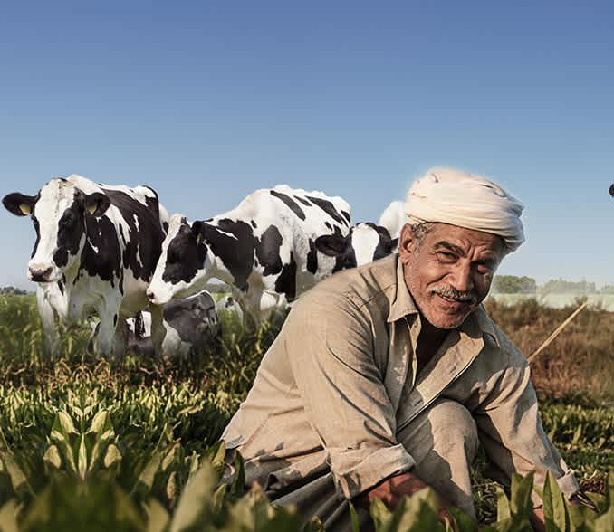 Micro loan for livestock