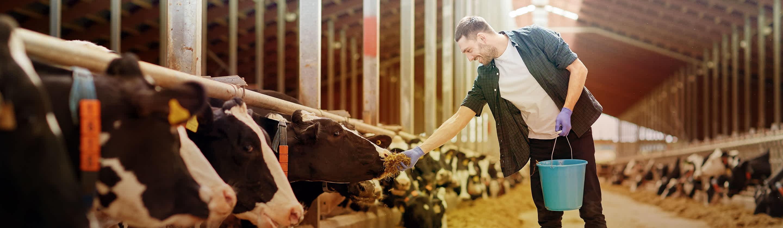 Development of Livestock Projects Finance
