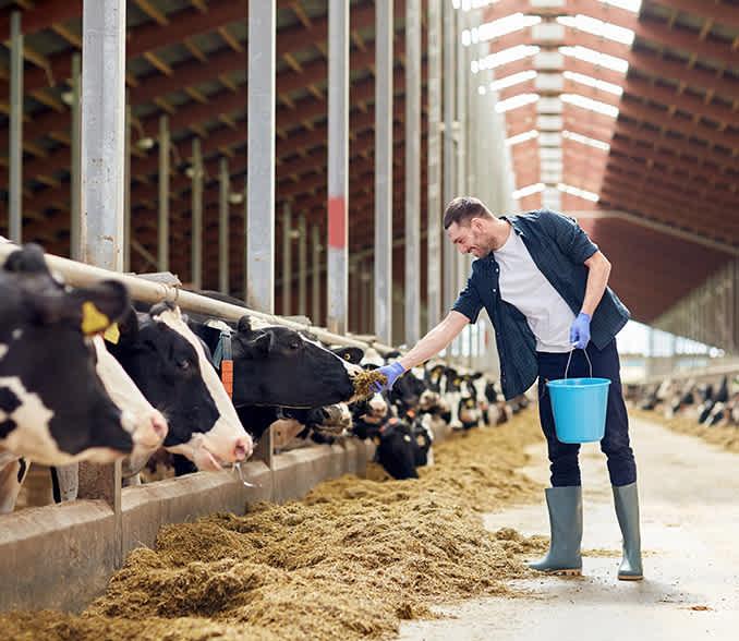 Development Livestock Projects Finance
