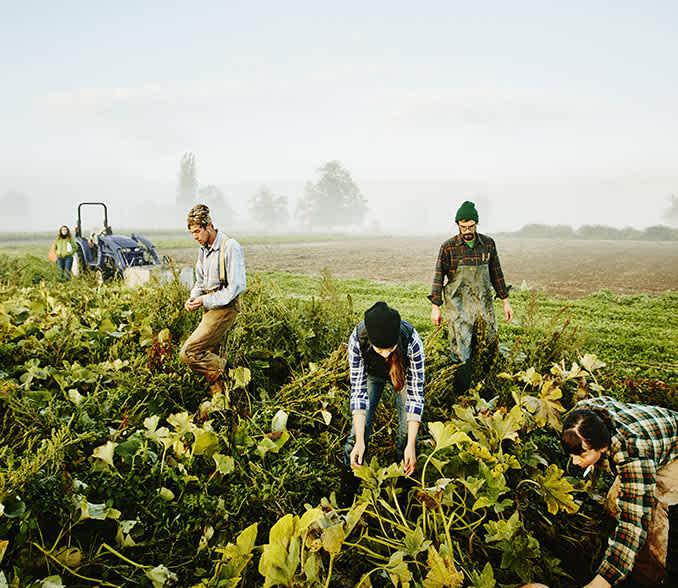 MFB Élelmiszeripari Forgóeszköz Hitelprogram 2020