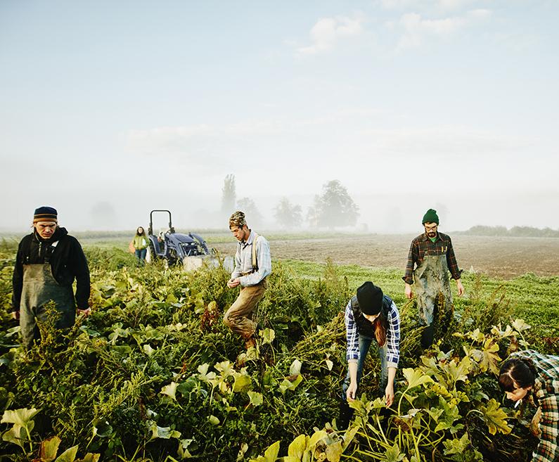 Kmetovalci na polju