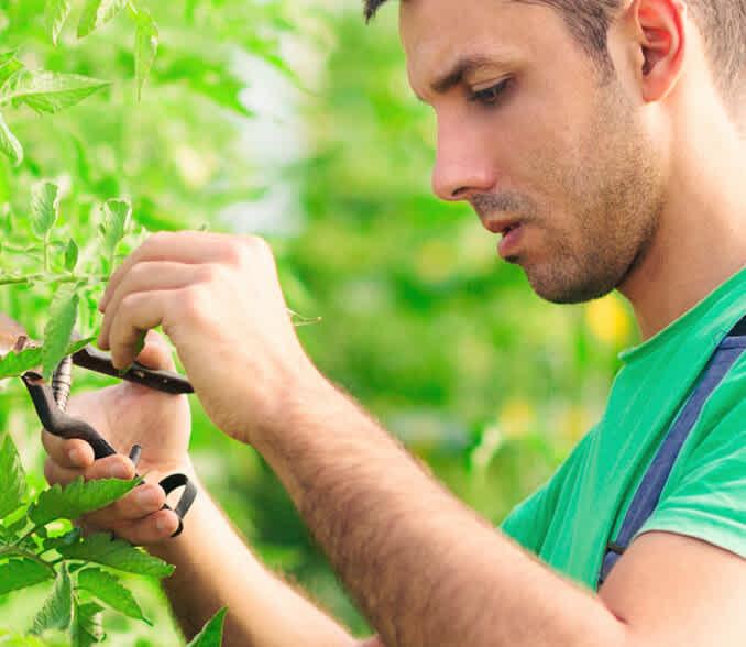 intesa farmer working capital loans