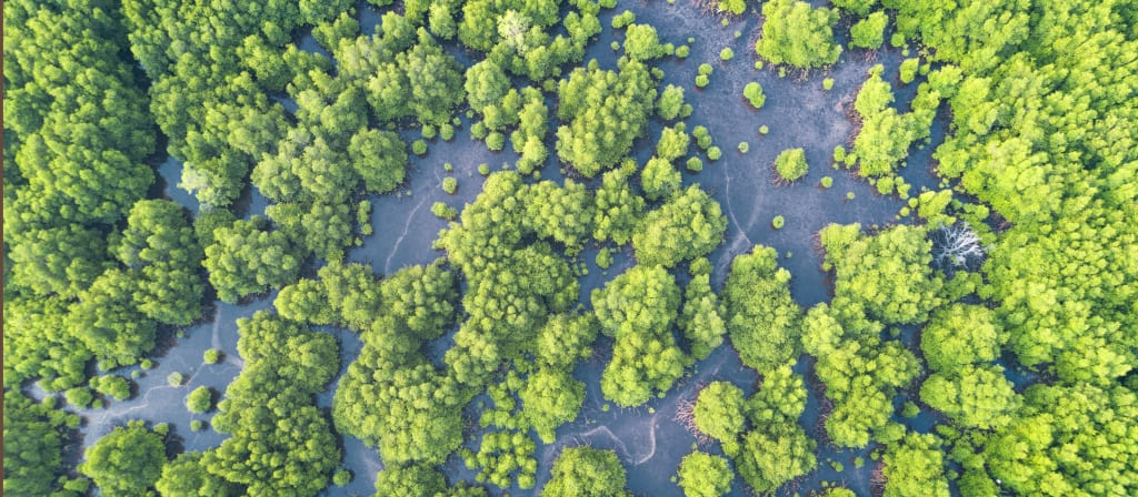 Hurricane benefits mangroves