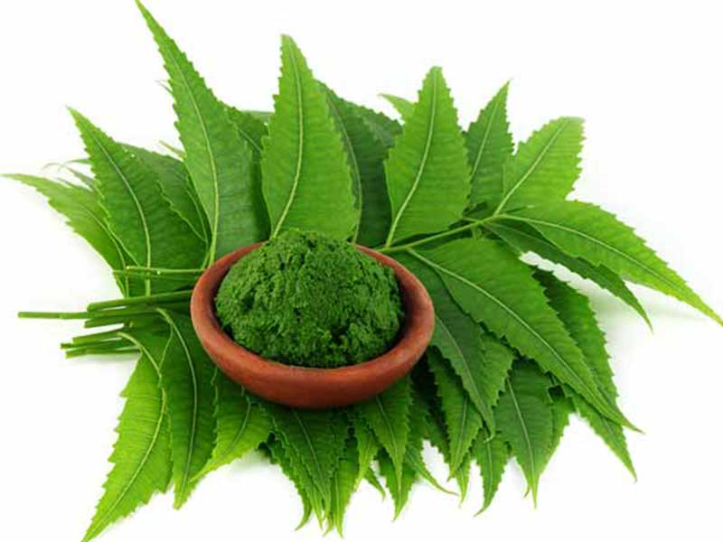 Neem leaves to get rid of dandruff