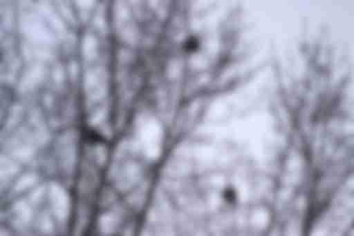 зимующие городские птицы