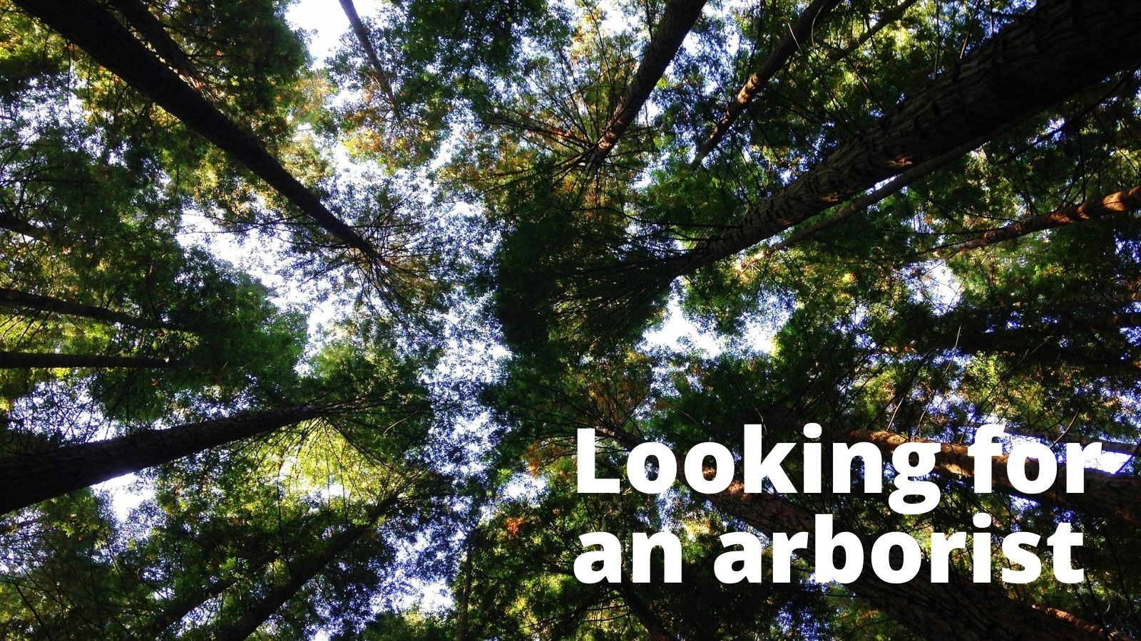 Looking for an arborist in tree tops