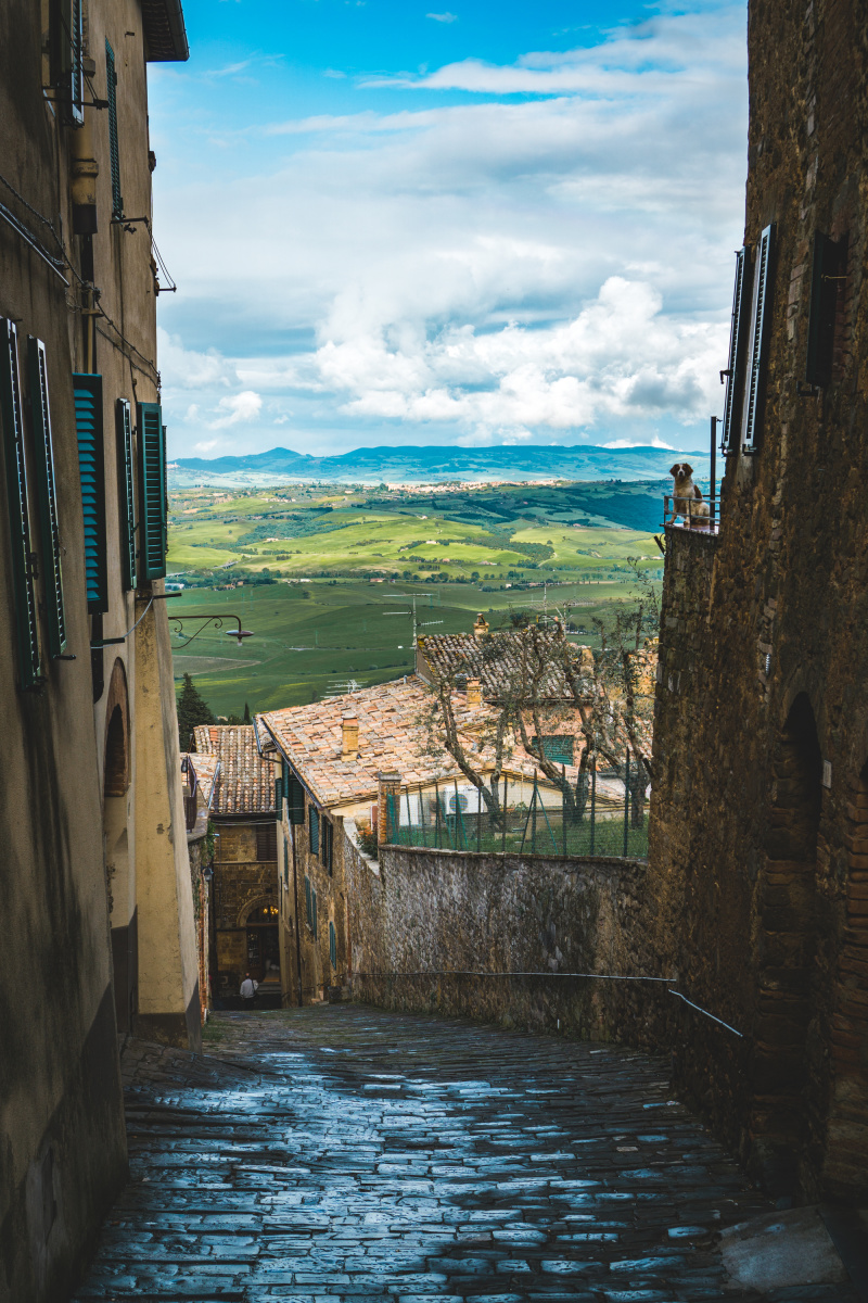 Guardian of Montalcino