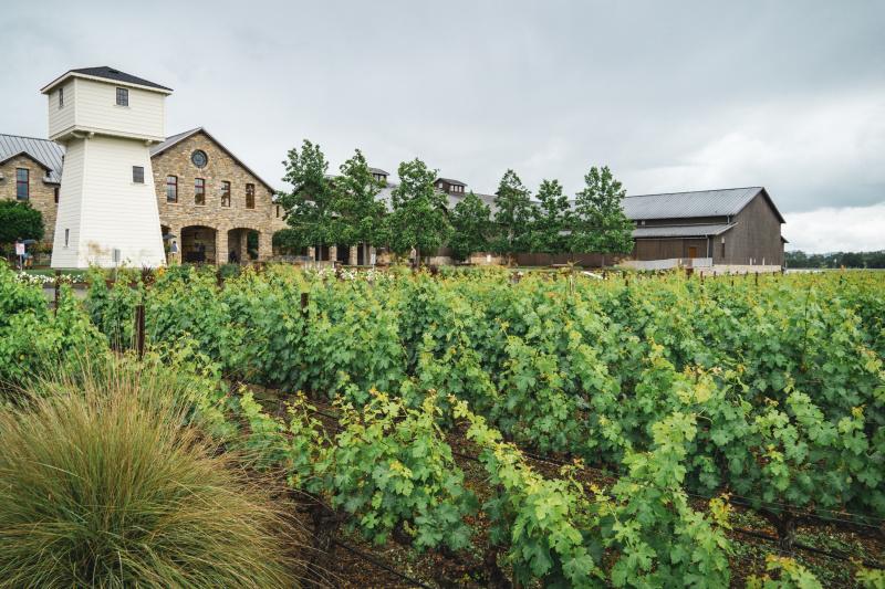 Silver Oak Vineyard