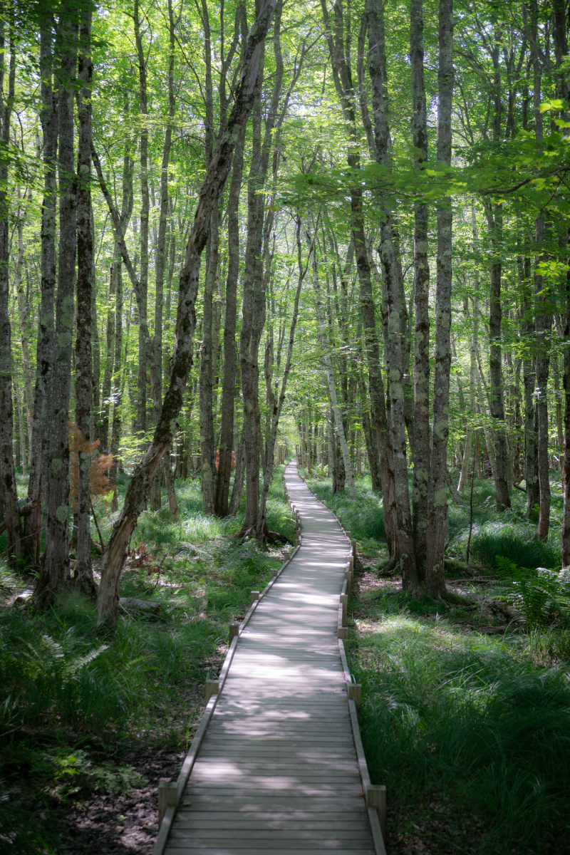 The serene Jesup Path trail