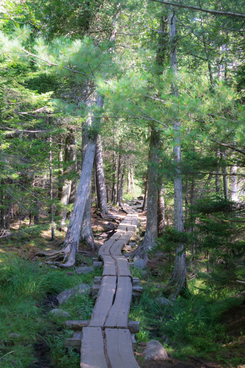 The forest trail around Jordan Pond