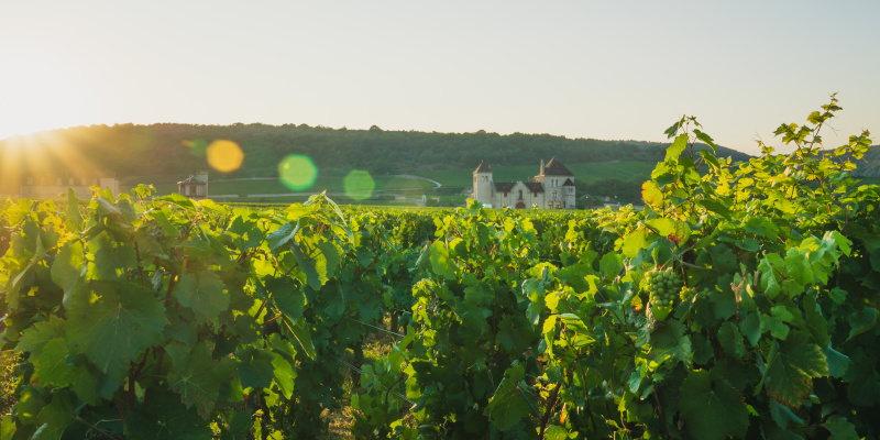 Vineyards around Château du Clos de Vougeot