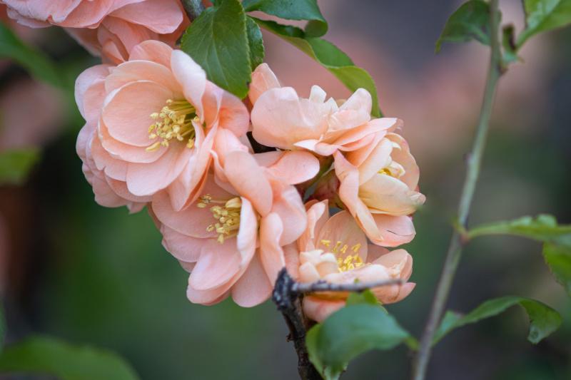 Pretty flowers around the Public Garden