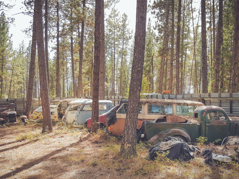 Old cars in the woods of Montana