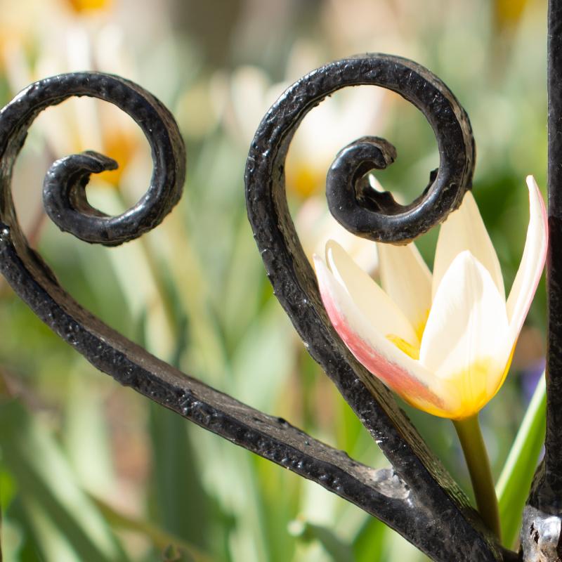 Flowers peaking through the railings