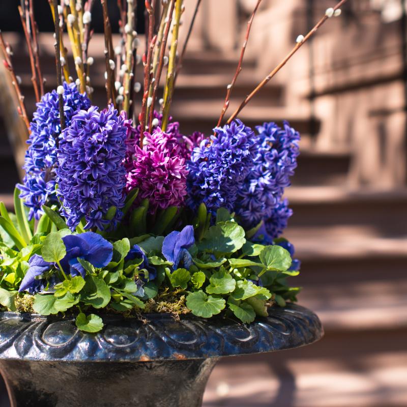 Beautiful flower arrangements in Back Bay