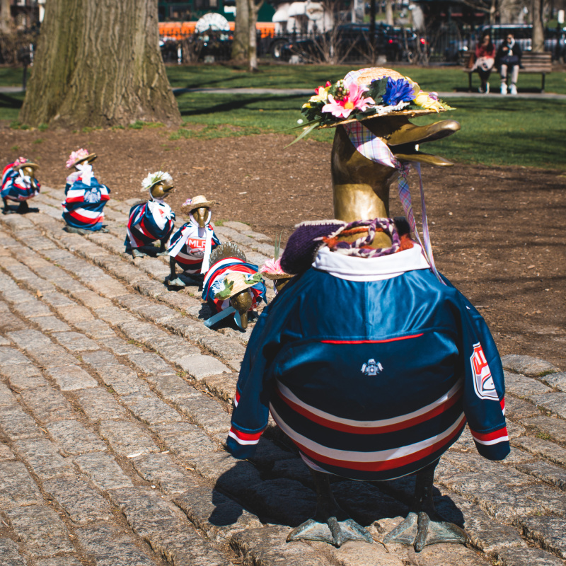 Make way for ducklings (in rugby jerseys)