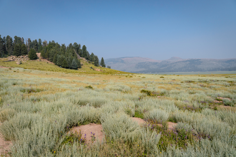 The grasslands of the caldera filled with prarie dogs