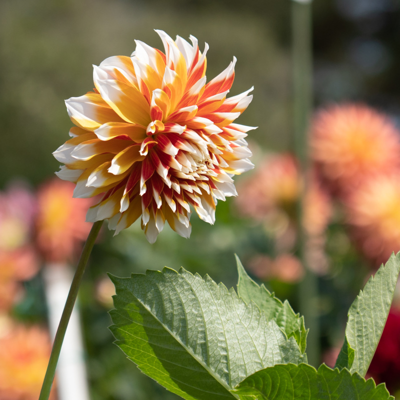 Conservatory Flowers 3