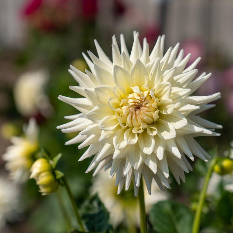 Conservatory Flowers 1
