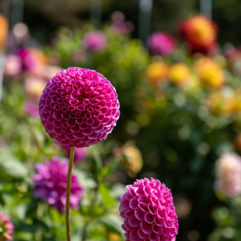 Conservatory Flowers 2