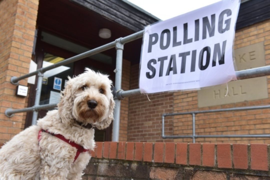 Serious dog at polling station