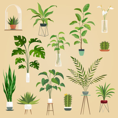 Bigstock Plants In Pots Houseplant Su 270983476