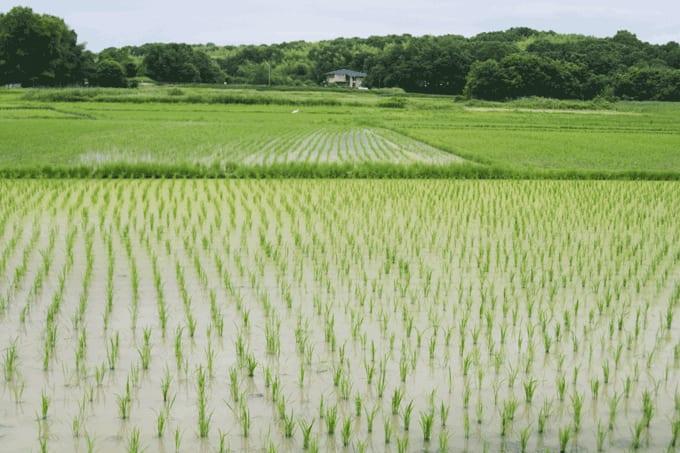 障害者の農業