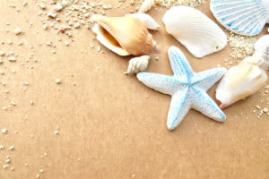 リゾート地の砂浜に綺麗な貝殻
