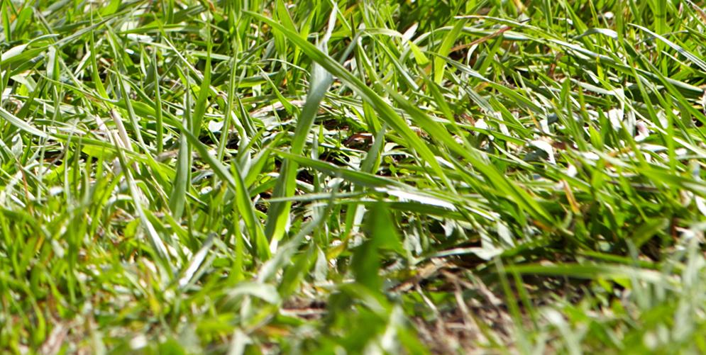 Lawn Care Winston-Salem