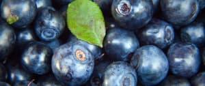 Antioxidants Advice