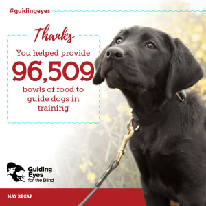 You Helped provide food for Guide Dogs!