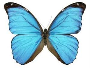 Struggle butterfly