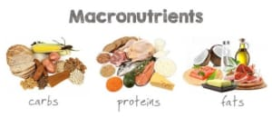 Macronutrients: What are they? What do they do? How do they work?