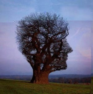 The Tree of Training