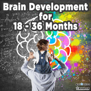 Brain Development for 18 – 36 Months