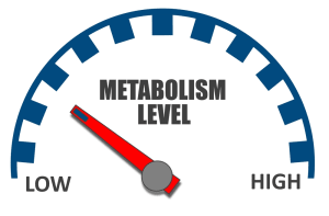 Can You Increase Your Metabolic Rate?