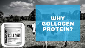 Collagen Protein 101: All the Basics You Need to Know