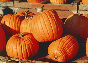Personal Training in Concord - Individual Fitness - Health Benefits of Pumpkin