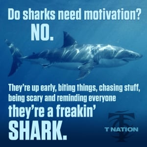 Personal Training in Gainesville - Axis Training Studio - Are you a shark?