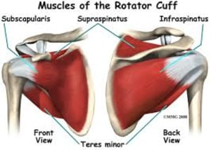 Personal Training in St. Helier - The Rock Fitness - THE ROTATOR CUFF