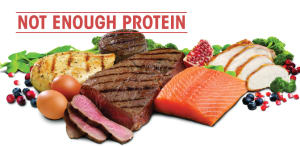 Personal Training in London - AG Personal Fitness - Are you eating enough Protein??