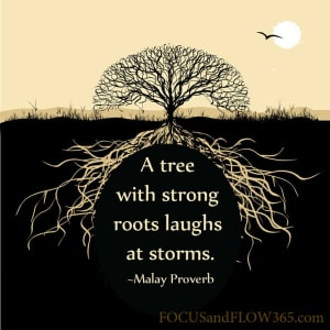 in Wake Forest - Innovative Martial Arts Academy - A Tree With Strong Roots