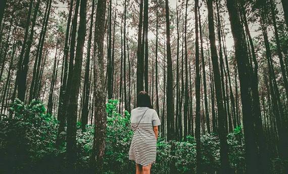Gunung Pancar - Tempat Wisata di Bogor