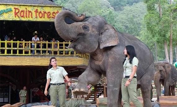 Taman Safari - Tempat Wisata di Bogor
