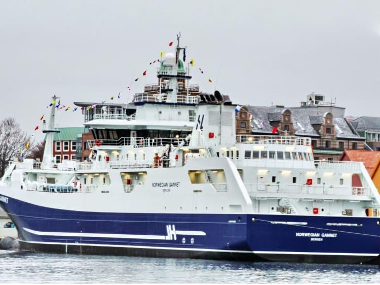 Norwegian Gannet