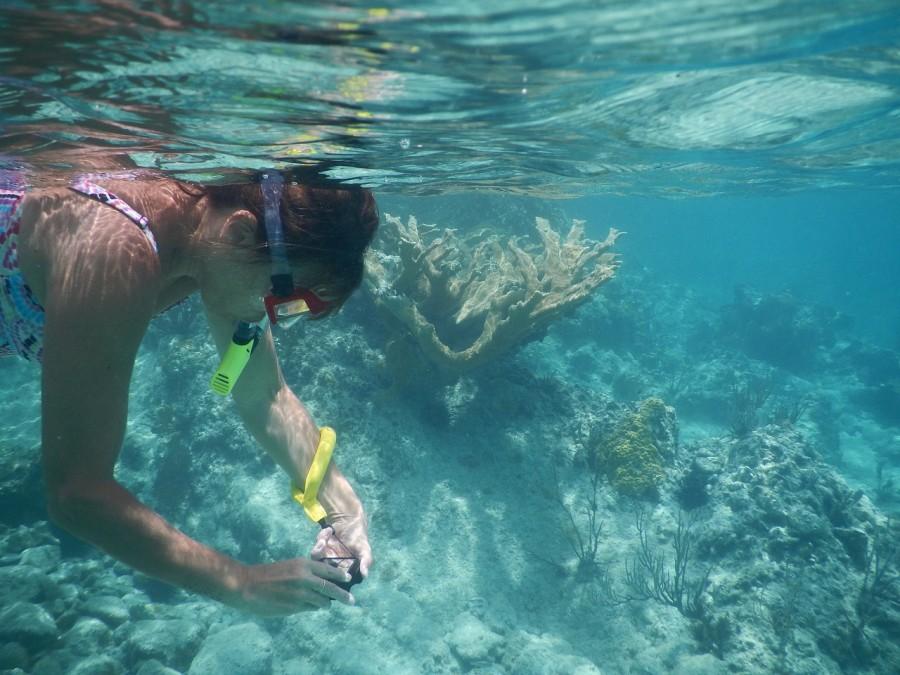 snorkeling-tioman-malesia